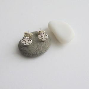 P_001  clover pierce