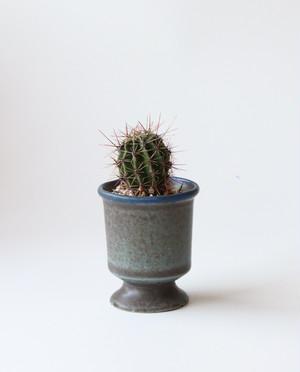 Pot. Gobletと植物セット