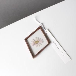 シオン / A piece of nature 菱形 小