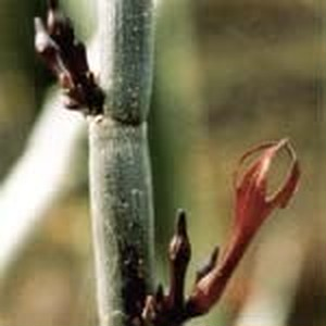 リリースカクタス[Release Cactus]
