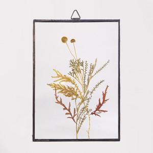 Botanical Frame S41 - Black