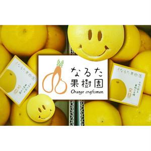 成田果樹園の文旦〔贈答用〕3kg