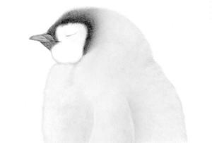 名取千春 ポストカード モノクロシリーズ 皇帝ペンギンヒナ
