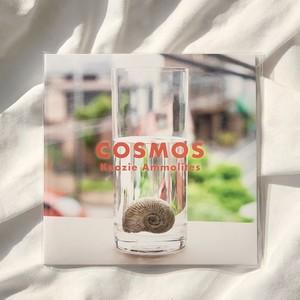 COSMOS / Koozie Ammolites