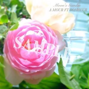 写真 薔薇『セプタード・アイル』