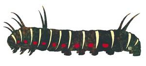 しおり  オオゴマダラの幼虫