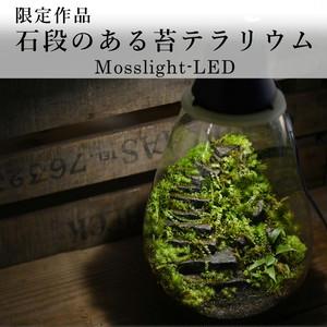 【現物販売・苔テラリウム】石段のある苔テラリウム【Mosslight-LED】1.9#6