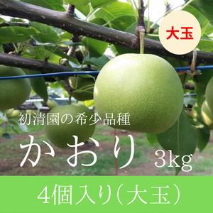 【希少な芳醇梨!少量】かおり大玉 4個入り 3kg