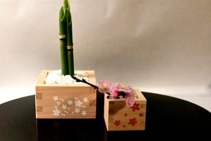 初心者さんが枡で楽しむトクサ簡単寄せ植え 白い桜枡とピンクの桜枡