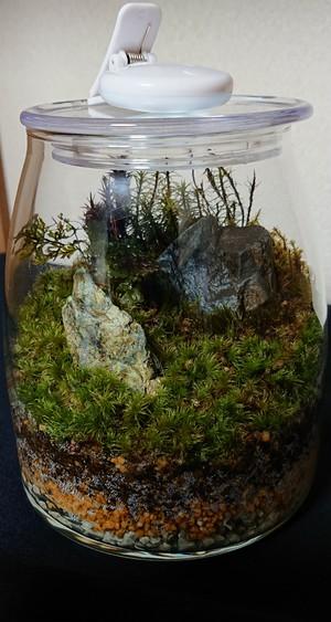苔ボトル Kokebottle Moss bottle ライト付きセット 017