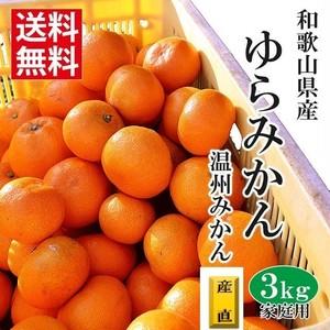 【和歌山県産】ゆらみかん 【ご家庭用】3kg /箱【送料無料】