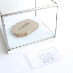+SCIENCE show case / メタセコイア化石