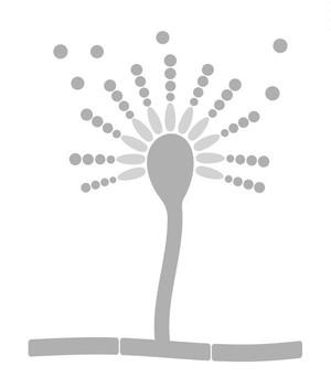 基礎講座テキスト送料(1〜4冊まで)