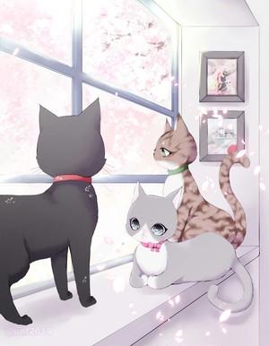 保護猫支援寄付企画ポストカード②封筒に入れて投函