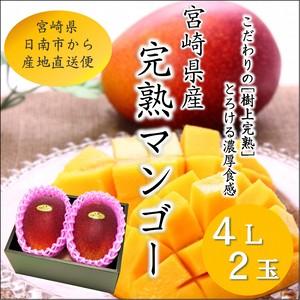 宮崎完熟マンゴー 4L×2玉 化粧箱入