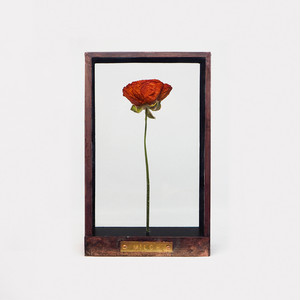 Botanical Frame D02 - Copper