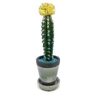eco plant 014 フェイクグリーン (サボテン) / 陶器製花器 (受け皿付き)