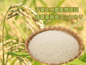 【新米】自家製コシヒカリ(精米)5kg