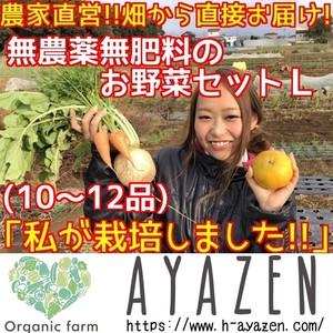 無農薬野菜セットL 10〜12品
