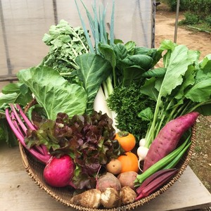 季節のおまかせ野菜セットL