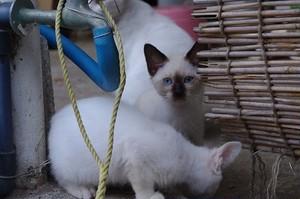 【PHOTO】石垣島のある日の風景(子猫)
