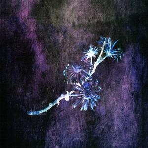 Michiru Aoyama 「Winter light」
