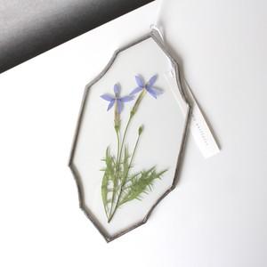イソトマ / A piece of nature Plate