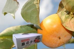 島の柿 農薬節減8割減 5kg