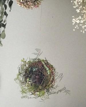 フライングボール 鳥の巣
