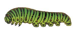 しおり  キアゲハの幼虫