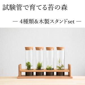 【実験のように楽しむ 苔テラリウム】 試験管4本セット 木製スタンド付き