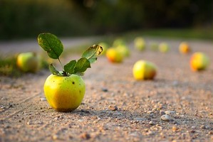 apple roadサポート切符【ショートラン】