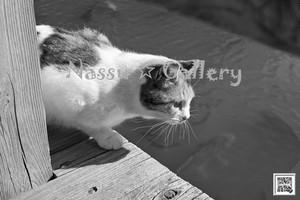 公園のネコちゃんモノクロ~Cute cats of the park - monochrome~①