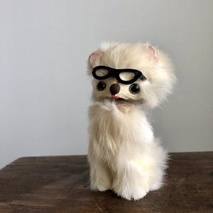 めがねをかけた白猫