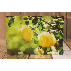 黄色バラ/ポストカードweb限定価格/浜松雑貨屋 C0pernicus