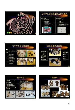 プライベートセミナー:ウサギ:04-消化器疾患(腸炎・肝不全)(ハンドアウト)