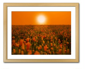 ORANGE SUN LIGHTING THE POPPY FIELD(ポピー畑を照らすオレンジの太陽)