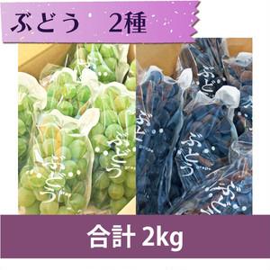 【ぶどう 2種】キャンベル 1kg・ナイアガラ 1kg