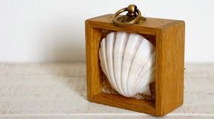 シーズンフレーム#1(shell)