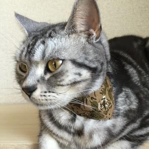 トラサファリ柄 猫用バンダナ風セーフティ首輪