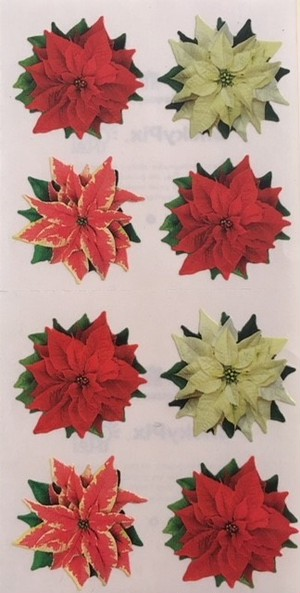Poinsettia / PH