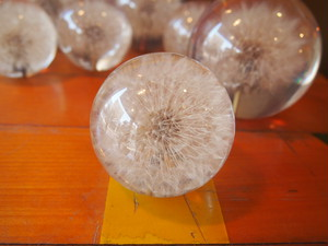 DANDELION PaperWeight Size S