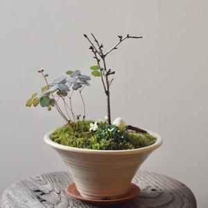 桜と草花の小さな盆栽