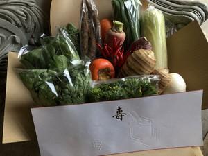 京野菜セット(冬季のみ)