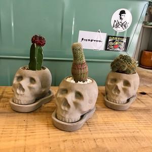 Skull pot x サボテン植え