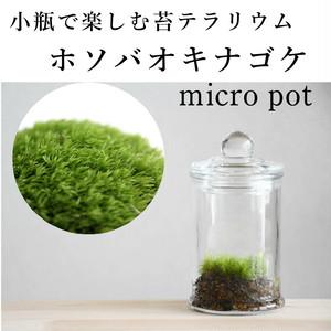 小さな苔の森 ホソバオキナゴケ  micro pot ◆苔とゆっくり向き合いたい人に 【苔テラリウム】