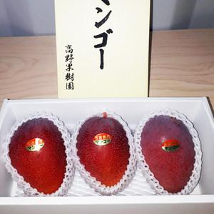 宮古島産 極上の逸品 完熟 アップルマンゴー1kg(2~3玉)18度以上 新鮮 宮古島産マンゴー