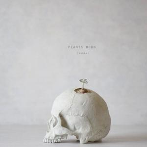 plants born (human)シンニンギア