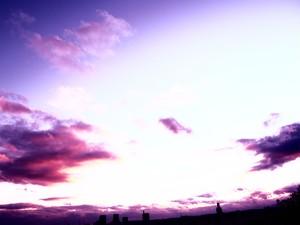 夕陽 (紫) 24