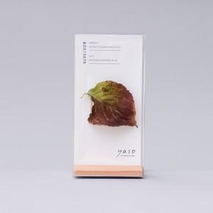 1147_ヤマボウシの葉